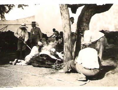 Cárdena Andaluza 28