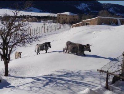 Cardena Andaluza nieve